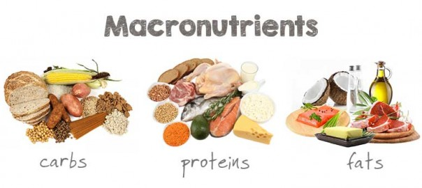 Macronutrients Header